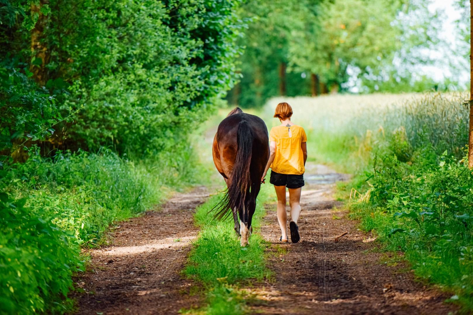 Balade à cheval en Sud Charente